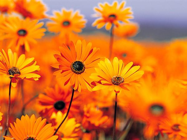 Umbes sellised lilled olid.