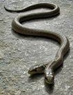 two_headed_snake_by_slug45