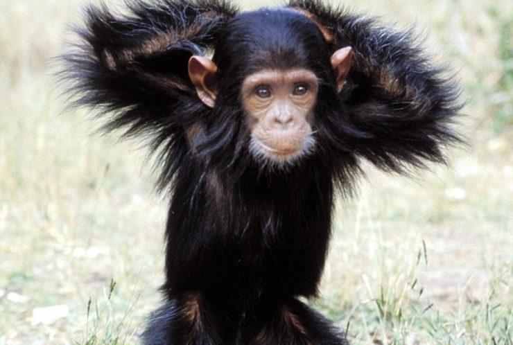 Kas Sina oled oma ahvi taltsutanud?